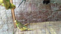 Bird, Parakeet, Parrot, Fowl, Poultry, Chicken, Beak, Zoo, Coat, Jacket, Finch, Macaw