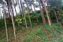 Vegetation, Plant, Tree, Land, Forest, Woodland, Path, Tool, Axe, Yard, Grove, Trail, Rainforest, Jungle, Bush