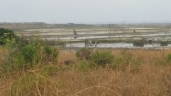 Grass, Plant, Bush, Vegetation, Land, Field, Grassland, Countryside, Water, Rural, Lawn, Tree, Woodland, Forest, Savanna