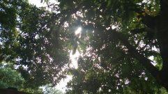 Flare, Light, Plant, Tree, Vegetation, Tree Trunk, Sunlight, Land, Jungle, Forest, Woodland, Rainforest, Wildlife, Leaf, Food