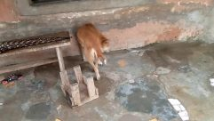 Canine, Dog, Pet, Slate, Wood, Den, Dog House, Golden Retriever, Building, Plywood, Puddle, Rural, Countryside, Wildlife, Antelope