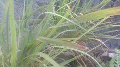 Plant, Grass, Agavaceae, Vegetation, Lawn, Reptile, Snake, Bush, Agropyron, Land, Reed, Leaf
