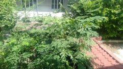 Vegetation, Plant, Bush, Tree, Yard, Potted Plant, Jar, Pottery, Vase, Land, Weather, Sky, Planter, Herbal, Herbs