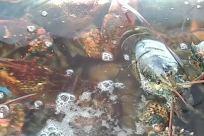 Sea Life, Seafood, Water, Crab, Lobster, Crawdad
