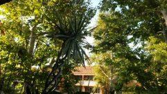 Plant, Garden, Arbour, Building, House, Housing, Villa, Yard, Porch, Hotel, Tree, Patio, Resort, Countryside, Vegetation