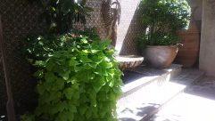 Potted Plant, Jar, Vase, Pottery, Plant, Art, Sculpture, Statue, Garden, Arbour, Planter, Vegetation, Flagstone, Herbs, Tree