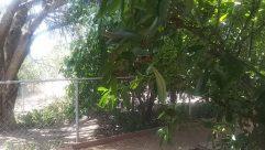 Arbour, Garden, Plant, Vegetation, Patio, Porch, Land, Yard, Blossom, Flower, Tree, Path, Jungle, Rainforest, Pergola
