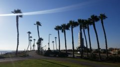 Tree, Arecaceae, Plant, Palm Tree, Grass, Building, Neighborhood, Path, City, Town, Metropolis, Vegetation, Road, Downtown, Sky