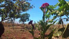 Plant, Vegetation, Soil, Field, Blossom, Flower, Countryside, Agriculture, Tree, Land, Bird, Rural, Grassland, Ground, Farm