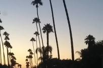 Tree, Arecaceae, Palm Tree, Silhouette, sky, Sun, big big trees
