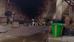 Bucket, Soil, Wildlife, Art, Cattle, Cow, Canine, Face, Zoo, Bird, Photo, Photography, Elephant, Pet, Painting