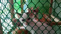 Husky, Cat, Kitten, Head, Puppy, Portrait, Photography, Photo, Play, Female, Eskimo Dog, cat