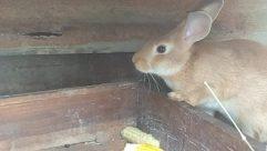 Rodent, Bunny, Rabbit, Plastic Wrap, Hare, Home Decor, Rat, Furniture, Room, Pet, Cat, Bird, Tub, Wildlife, Reptile