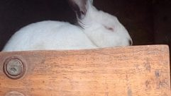 Rodent, Hare, Bunny, Rabbit, Bird, Bear, Wildlife, Wood, Pet, Cat, Canine, Hardwood, Dog, Plywood