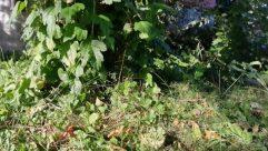 Vase, Potted Plant, Jar, Pottery, Plant, Vegetation, Bush, Planter, Herbs, Herbal, Leaf, Blossom, Flower, Yard, Grass