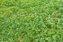 Vegetation, Bush, Plant, Field, Grass, Tree, Forest, Woodland, Land, Agriculture, Countryside, Food, Leaf, Grove, Green