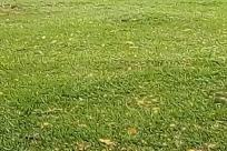 Plant, Grass, Vegetation, Bush, Lawn, Ball, Field, Sports, Sport, Golf Ball, Golf, Team, Team Sport, Football, Building