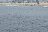 Vehicle, Watercraft, Vessel, Water, Ocean, Sea, Boat, Bird, Rowboat, Shoreline, Coast, Seagull, Beach, People, Building