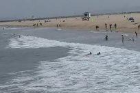 Water, Ocean, Sea, Shoreline, Bird, Coast, Beach, Sea Waves, Vehicle, Watercraft, Vessel, Sport, Sports, Swimming, Boat