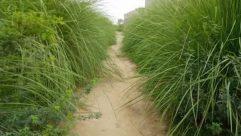 Grass, Plant, Ditch, Vegetation, Soil, Lawn, Path, Bush, Land, Field, Forest, Tree, Woodland, Trail, Ground