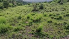 Plant, Grass, Wilderness, Vegetation, Bush, Field, Grassland, Landscape, Lawn, Green, Countryside, Land, Tree, Rural, Farm