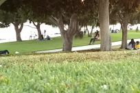 Grass, Plant, Lawn, Park, Vegetation, Tree, Furniture, Yard, Woodland, Forest, Land, Field, Bench, People, Sports