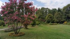 Plant, Vegetation, Bush, Tree, Grass, Blossom, Flower, Yard, Land, Woodland, Forest, Grove, Conifer, Lawn, Park, Rhododendrom tree