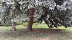 Tree, Plant, Conifer, Spruce, Abies, Fir, Tree Trunk, Grass, Vegetation, Ice, Ground, Snow, Yard, Building, Pine