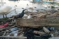 Wood, Bird, Water, Driftwood, Rock, Ocean, Sea, Seagull, Pigeon, Waterfowl, Vehicle, Waterfront, Boat, Dove, Soil