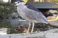Bird, Waterfowl, Ardeidae, Heron, Water, Crane Bird, Stork, Beak, Egret, Land, Jay, Shoreline, Seagull