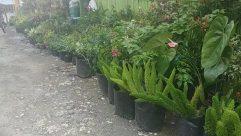 Yard, Vase, Jar, Pottery, Potted Plant, Plant, Backyard, Planter, Herbs, Vegetation, Herbal, Bike, Vehicle, Bicycle, Green