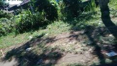 Vegetation, Plant, Building, Housing, Land, Tree, Yard, Countryside, Rural, Shelter, House, Grass, Woodland, Forest, Rainforest