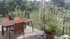 Chair, Furniture, Yard, Plant, Jar, Vase, Pottery, Potted Plant, Rock, Dining Table, Table, Vegetation, Backyard, Planter, Rubble