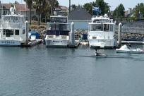 Boat, Watercraft, Vessel, Waterfront, Port, Pier, Dock, Harbor, Rowboat, Marina, Steamer, Building