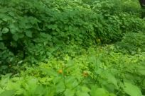 Vegetation, Plant, Field, Tree, Invertebrate, Grassland, Insect, Land, Potted Plant, Jar, Pottery, Vase, Woodland, Forest, Countryside