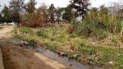 Land, Plant, Vegetation, Water, Bush, Grass, Ditch, Tree, Wilderness, Ground, Yard, Forest, Woodland, Stream, Creek