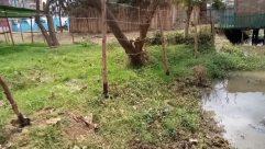 Yard, Tree, Plant, Countryside, Building, Shelter, Rural, Vegetation, Ground, Land, Backyard, Water, Forest, Woodland, Housing