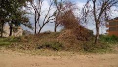 Field, Grassland, Tree, Plant, Ground, Vegetation, Mound, Grass, Land, Savanna, Landscape, Forest, Woodland, Tree Trunk, Countryside