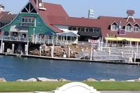 Water, Waterfront, Boat, Vehicle, Pier, Port, Harbor, Dock, Building, Housing, Newfoundland, Pet, Canine, Dog, House