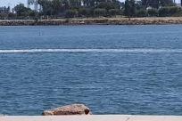 Water, Shorts, Vehicle, Ocean, Sea, People, Jet Ski, Vacation, Boat, Bike, Bicycle, Shoreline, Coast, Watercraft, Vessel