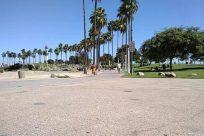 Path, Plant, Grass, Road, Lawn, Park, Street, City, Town, Building, Tree, Vegetation, Arecaceae, Palm Tree, Pavement
