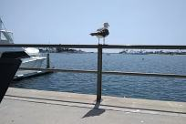 Bird, Water, Waterfront, Vehicle, Banister, Handrail, Seagull, Dock, Pier, Port, Aircraft, Airplane, Railing, Seaplane, Furniture