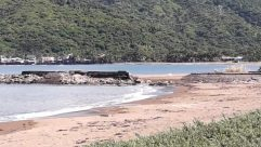 Water, Shoreline, Plant, Vegetation, Sea, Ocean, Land, Tree, Rainforest, Coast, Woodland, Forest, Beach, Cove, Cave