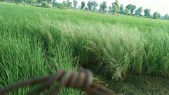 Grass, Plant, Vegetation, Field, Land, Lawn, Grassland, Bush, Tree, Woodland, Forest, Countryside, Paddy Field, Grove, Water