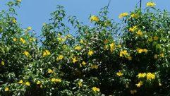 Plant, Flower, Blossom, Sunflower, Vegetation, Daffodil, Green, Daisies, Daisy, Land, Vase, Jar, Potted Plant