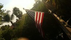 Symbol, Flag, American Flag, Flare, Light, Plant, Vegetation, Sunlight, Tree, Jungle, Land, Sky, Sun, Landscape