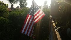 Flag, Symbol, Plant, Tree, American Flag, Flare, Light, Vegetation, Sunlight