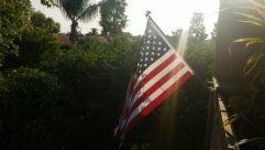 Flag, Symbol, American Flag, Plant, Tree, Vegetation, Flare, Light, Sunlight