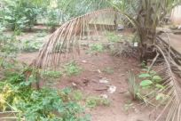 Plant, Vegetation, Tree, Land, Soil, Jungle, Rainforest, Woodland, Forest, Bush, Grove, Arecaceae, Palm Tree, Zoo, Field