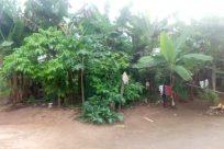 Plant, Vegetation, Land, Rainforest, Tree, Jungle, Countryside, Building, Woodland, Forest, Rural, Shelter, Grove, Yard, Field